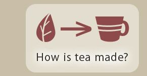 How is tea made?